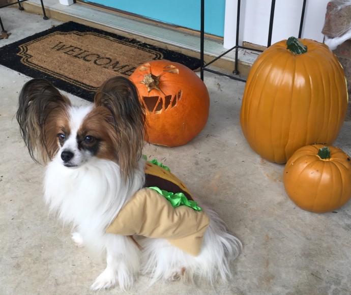dog-costume-taco