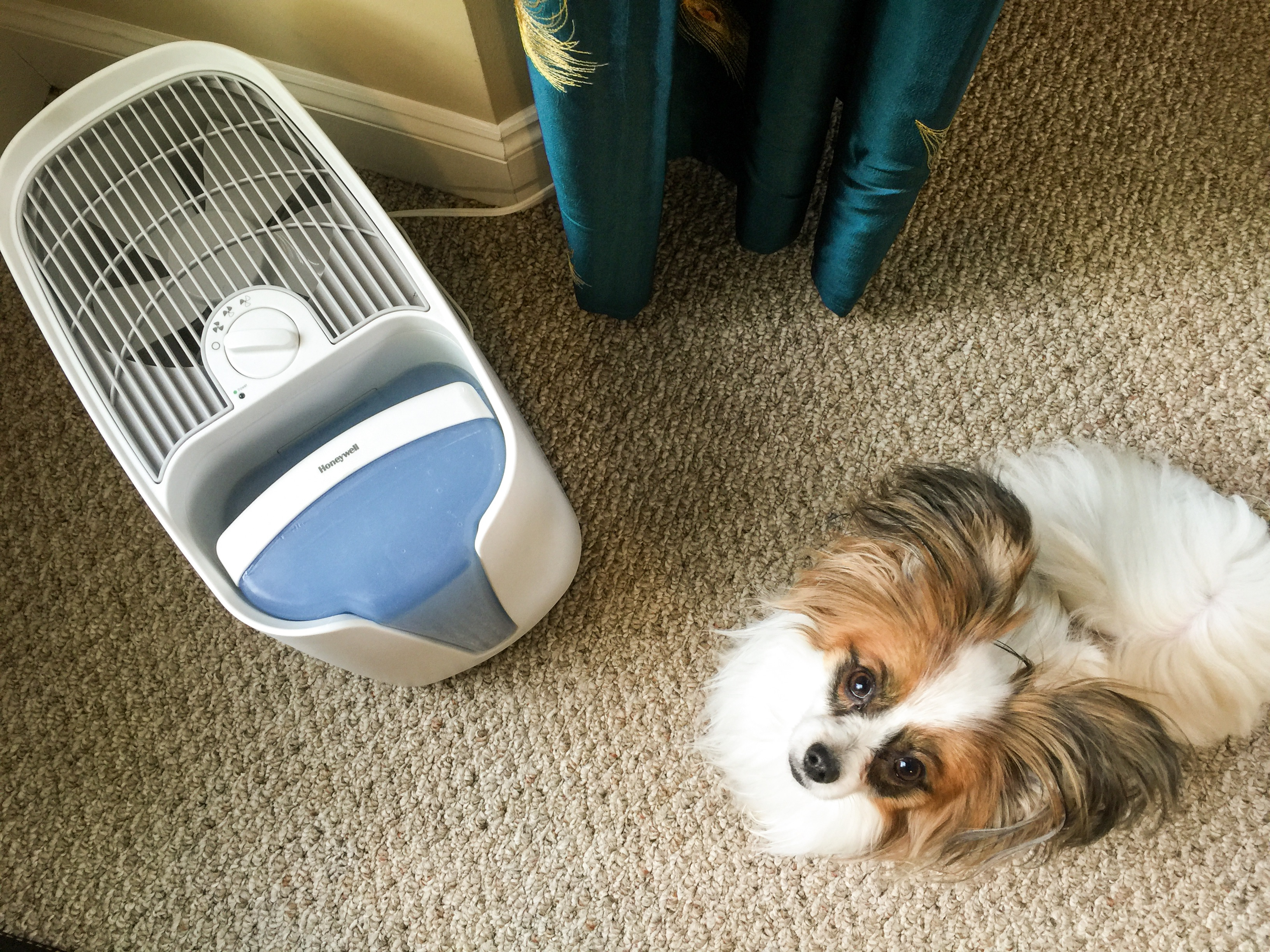 why_I_like_honeywell_cool_moisture_humidifiers